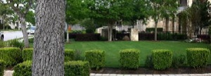 landscape maintenance austins best lawns